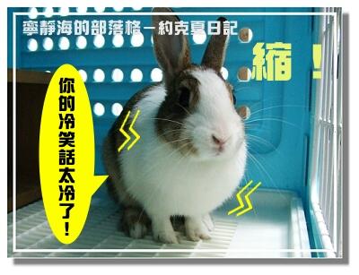 約克夏日記_20060306_縮成球
