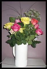 birthday-roses