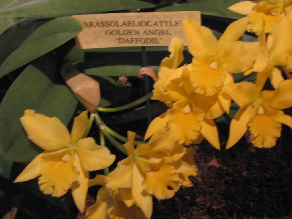 Yellow orchid for April