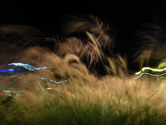 night grasses