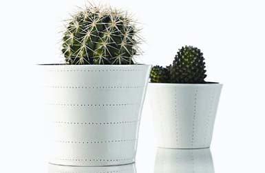 flowerpots_2_copy2-456x321