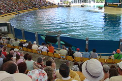 Killer Whale Show - First glimse