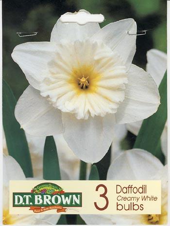 White Daff