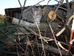 cat in the woodpile