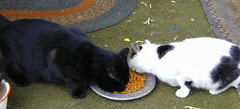 Boys Sharing Breakfast