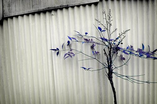 Perpole tree