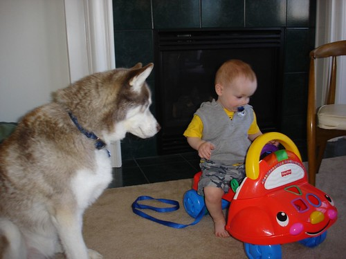 leash, car, Husky...
