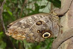 Butterflies #10
