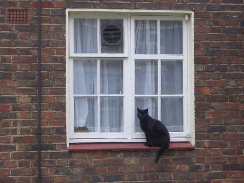 neighborhood cat