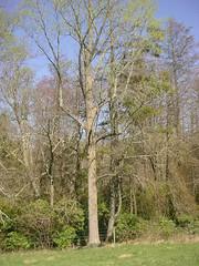 tree climbing 006