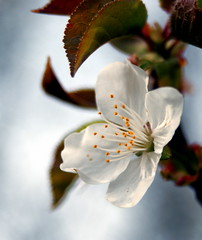 view Another Blossom by KariMelissa