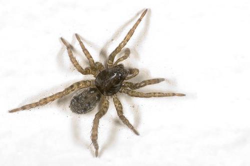 Een spin op de muur