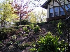 another front hillside garden after