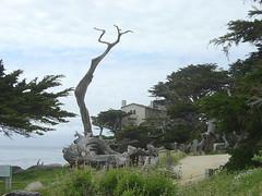 Pescadero Point - Dead Trees