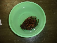 Resurrection Plant - Wet