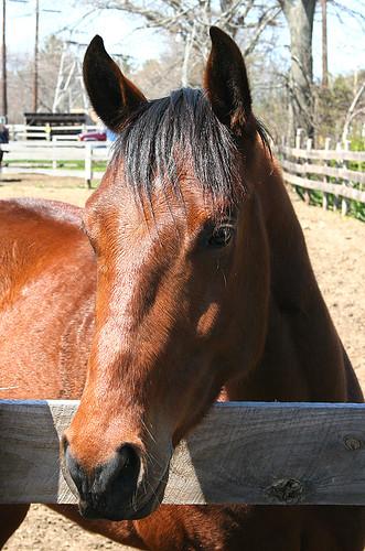horse-1-jpg