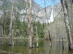 Yosemite - Marsh Sea / Yosemite Fall