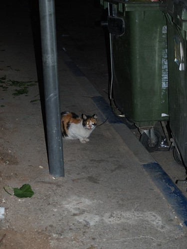 cat 60/248