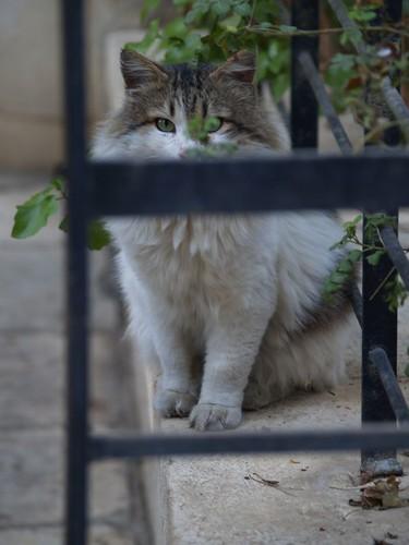 cat 130/248