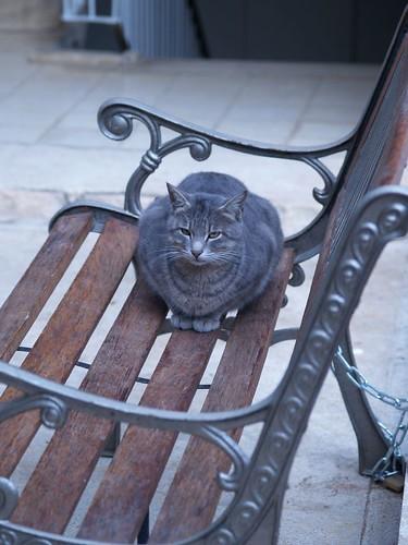 cat 153/248