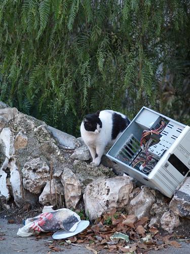 cat 172/248