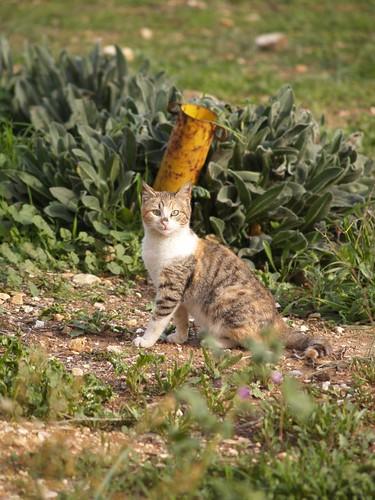 cat 205/248