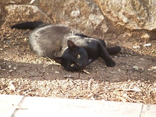 cat 212/248