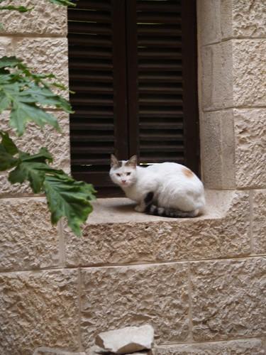cat 236/248