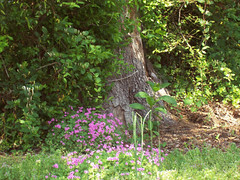 purp-on-tree-bottom