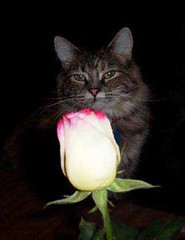 「第1號貓咪」Frankie