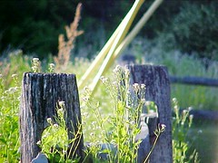 fence post flowers