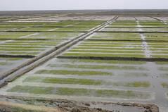 Rijstvelden en oneindige leegte in Noord-Korea