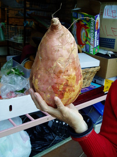 big sweet potato