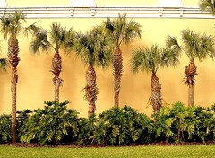 palm lineup