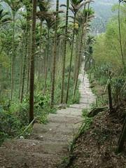 華山綠色隧道之旅 104