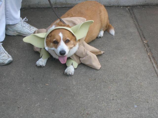 Yoda Pooch