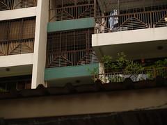 Diseased Dog at the Balcony
