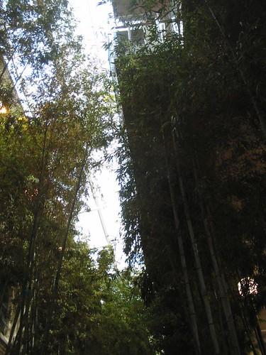 Indoor Bamboo Grove