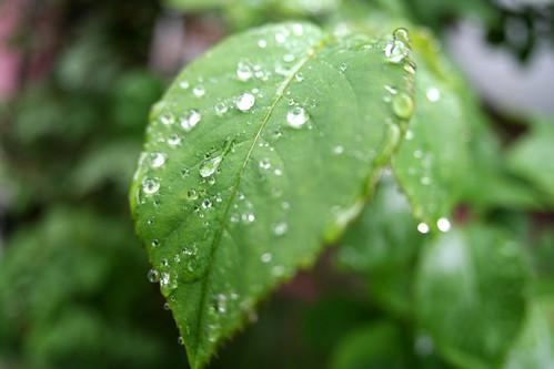 leaves in rain