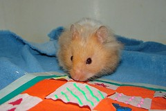 Ami Checks Out His Quilt