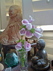 foxglove and buddhas