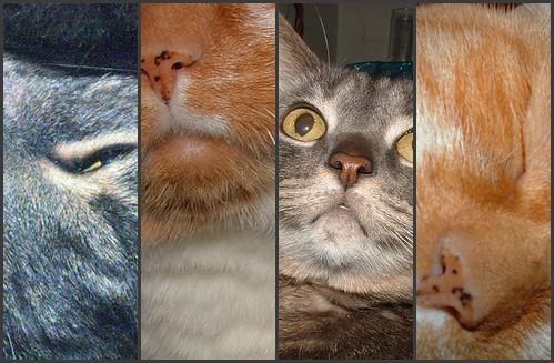 cat slices