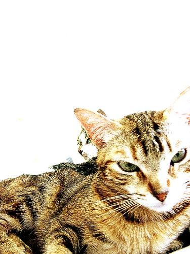 Catcard I
