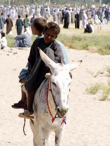 طفلين من الصعيد على ظهر حمار