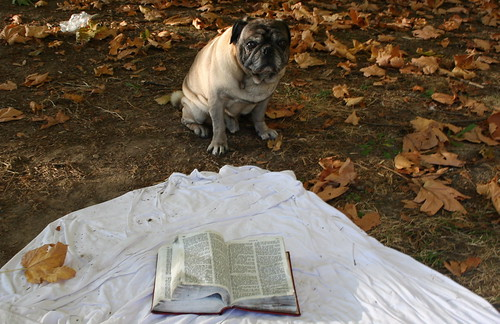 Pug and Abandoned Bible on Sheet