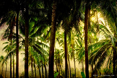 Jungle Tropical Paradise photo by Striking Photography by Bo Insogna