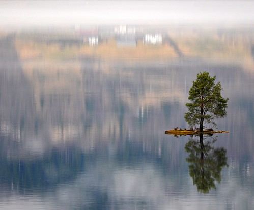 Beautiful little island with a lonely tree and a magic reflection photo by Martin Ystenes