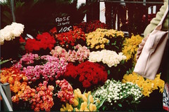 Flower stall in Paris photo by bethany-hirst