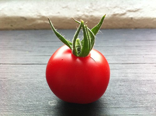 Just picked our first window farm tomato, gorgeous guy.