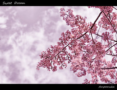 Sweet Dream / หลับฝันดีน่ะ photo by AmpamukA